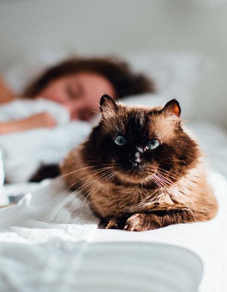 Gatto che riposa su NUVO