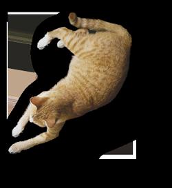 Paride gatto